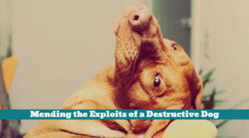 Mending the Exploits of a Destructive Dog
