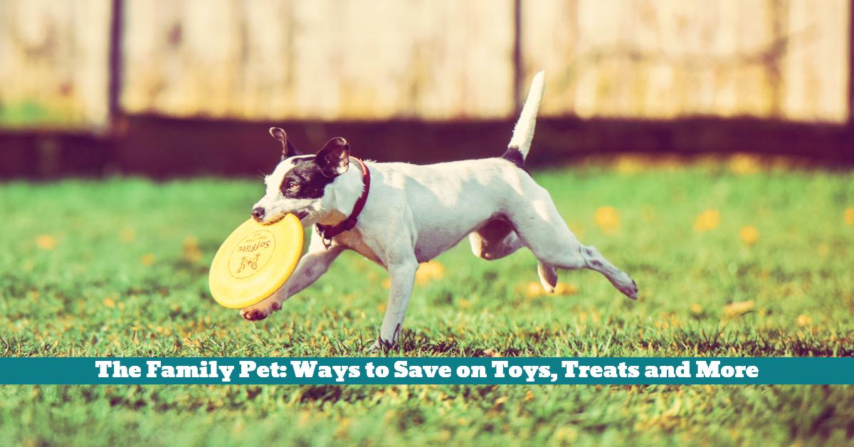 Pet_Toys_Treats_Saving_Discount