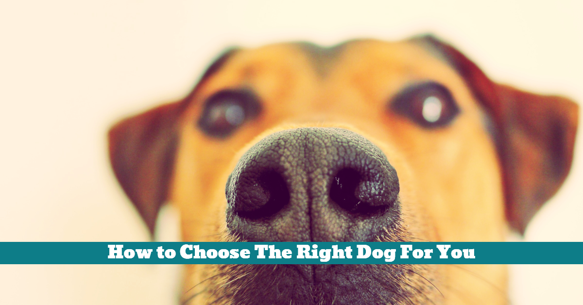 Dog_Breed_Choice_Right_Personal