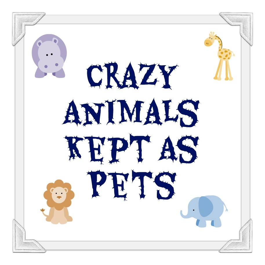 crazy_animals