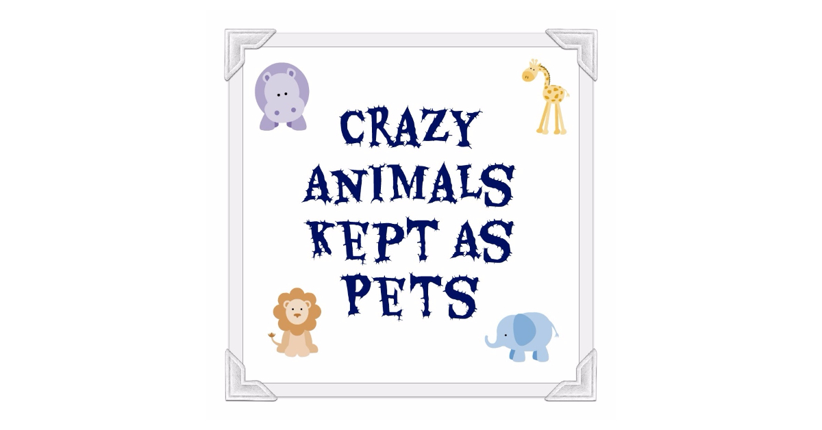 Pets_Crazy_Animals_Owners