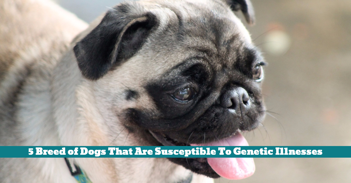 Dog_Breed_Genetic_Illness_Health