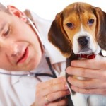 Pet Check-Ups: The Right Schedule to Follow