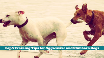 Top 5 Training Tips for Aggressive and Stubborn Dogs
