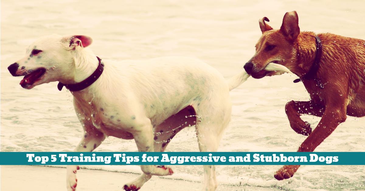 Dog_Training_Safety_Aggressive_Stubborn