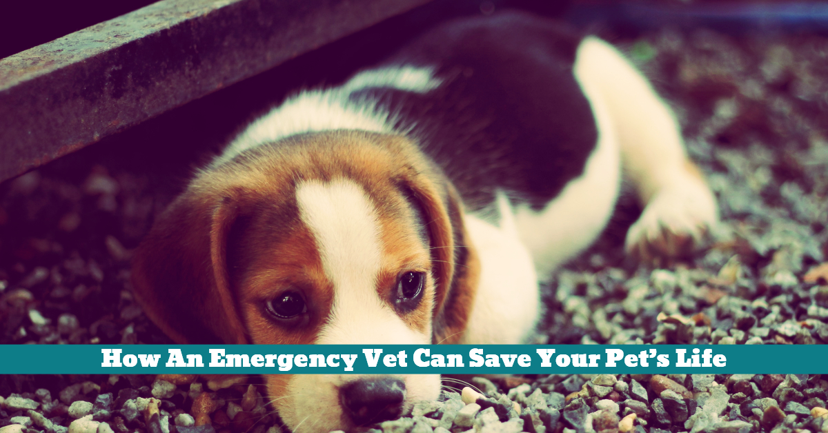 Pet_Vet_Emergency_Lifesaving