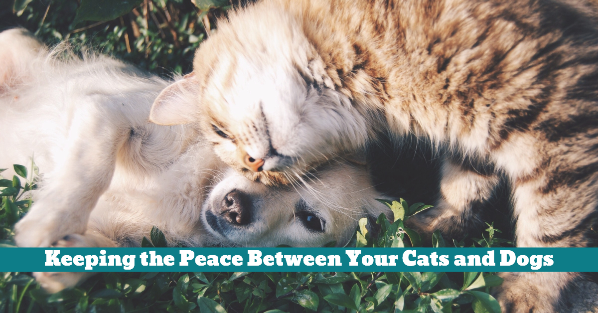Dog_Cat_Friendship_Friends_Peace_Sharing_Playing