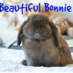 Pet Hooligans Interview: Disabled Rabbits