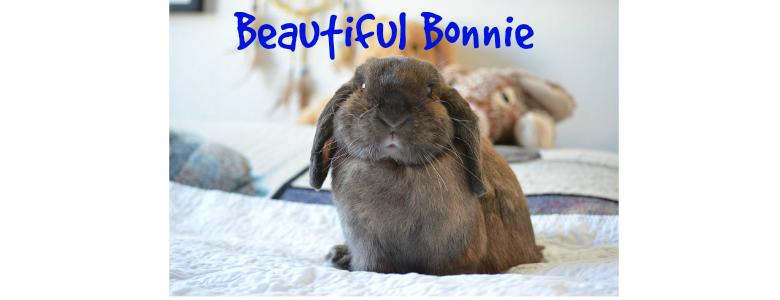 Pet Hooligans Interview: Disabled Rabbits