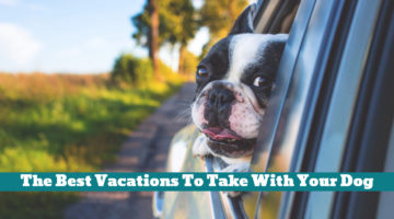 The Best Vacations To Take With Your Dog