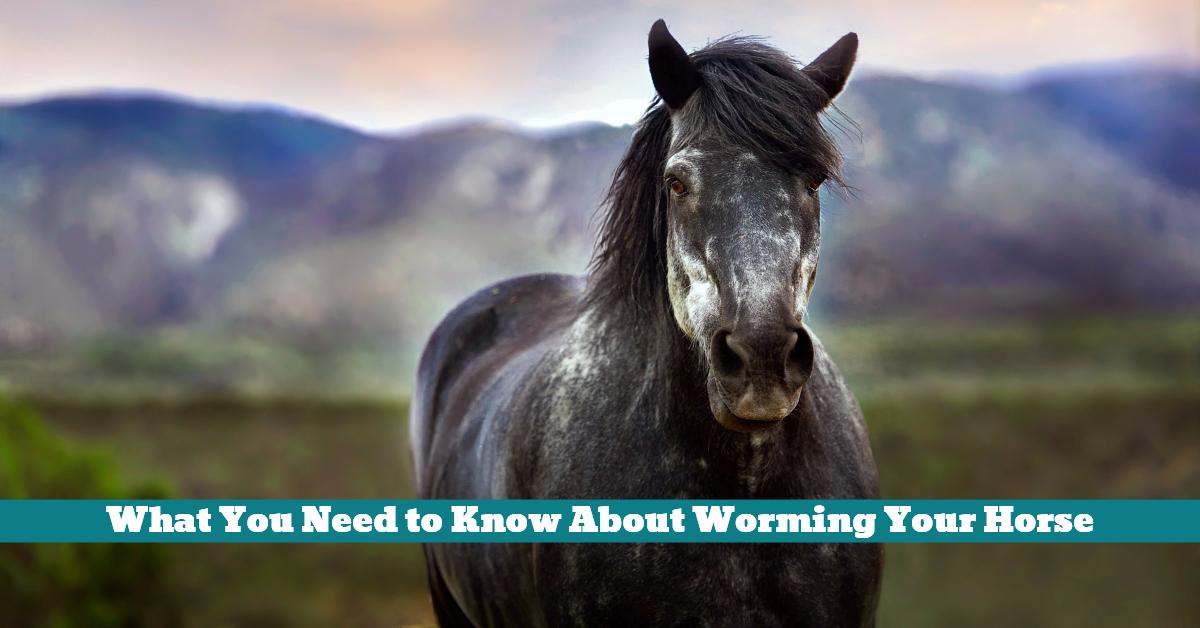 Horse_Worming_Vet_Health