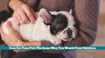 Care For Your Pets The Same Way You Would Your Children