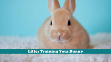 Litter Training Your Bunny