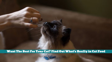 Want The Best For Your Cat? Find Out What's Really in Cat Food