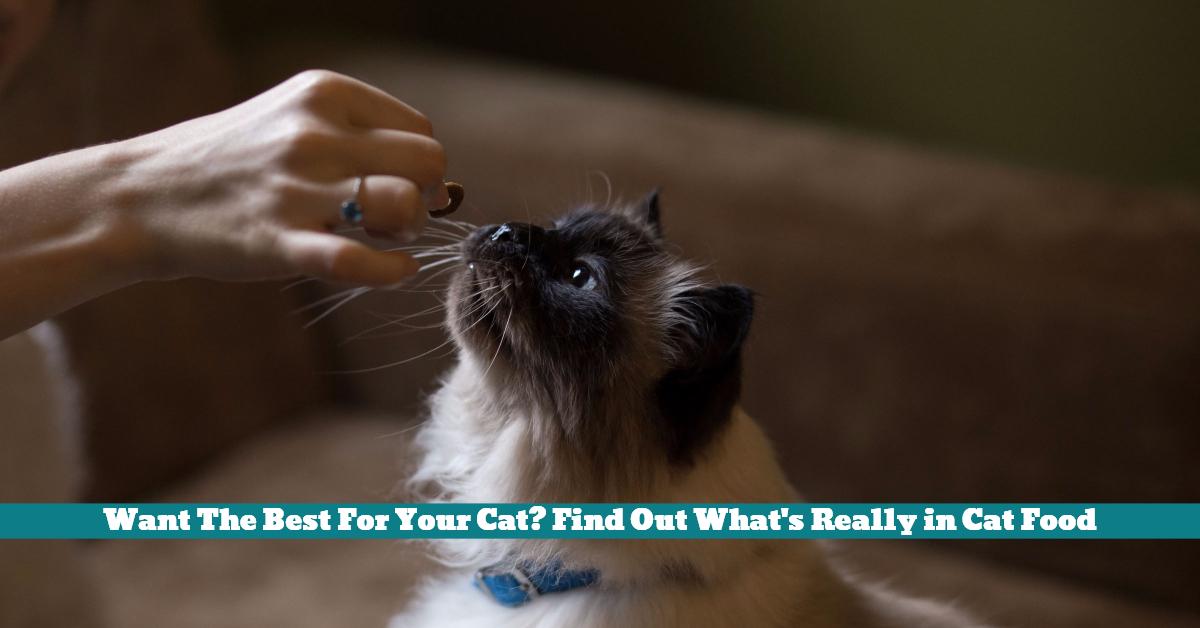 Cat_Food_Health