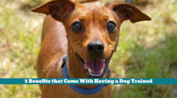 3 Benefits that Come With Having a Dog Trained