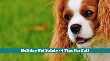 Holiday Pet Safety – 4 Tips For Fall
