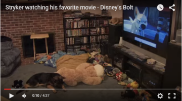 Does Your Dog Have a Favourite Movie?