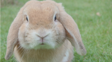 Rabbit Diseases to Be Aware Of