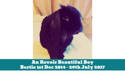 Au Revoir Beautiful Boy