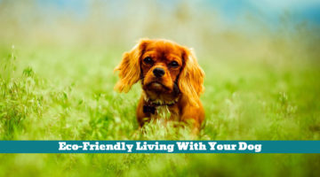 Eco-Friendly Living With Your Dog