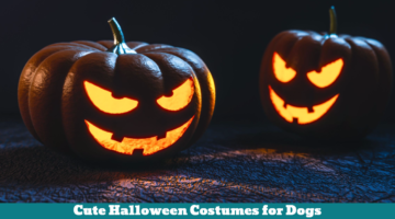 Cute Halloween Costumes for Dogs
