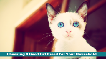 Choosing A Good Cat Breed For Your Household