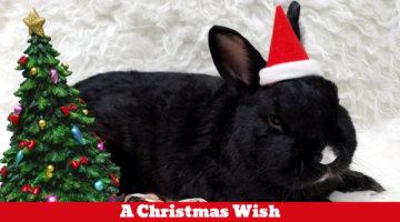 Bertie's Christmas Wish