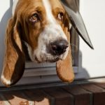 How to Train Your Pooch to Use the Doggie Door