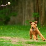 Fun and Innovative Ways to Exercise With Your Pet