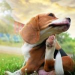 Allergies in Pets: What you Need to Know