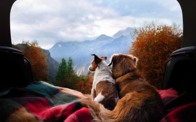 Taking Your Dog Camping: Supplies & Safety