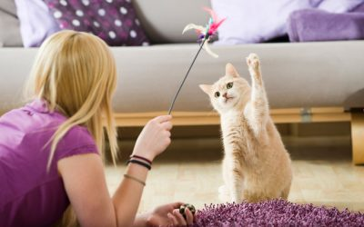 Cats and Exercising: What and How?