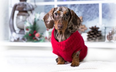 Tips for Caring For Your Dog This Winter