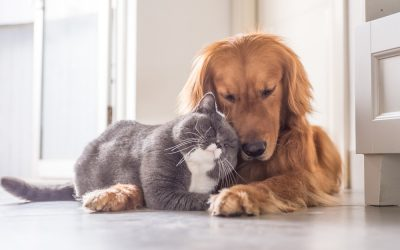 Keeping the Peace Between Your Cats and Dogs