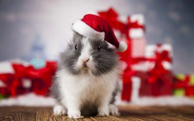 Bertie's Christmas Wish