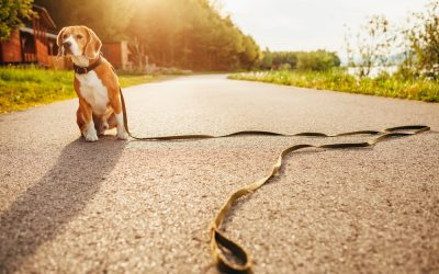 Be Proactive—Protect Your Pet Before It Goes Missing