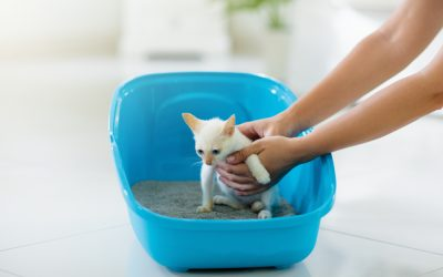 Litter Box Training Your Adopted Kitten
