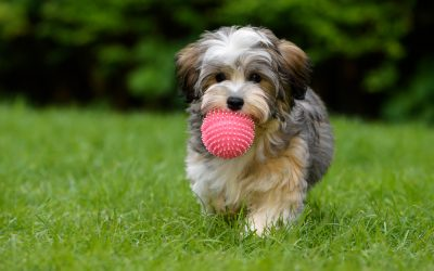 Train and Challenge Your Growing Pup With Fun