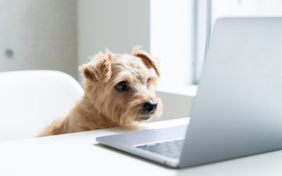 Best Tailwind Tribes for Pet Bloggers