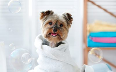 It's A Good Time to Groom Your Dog at Home