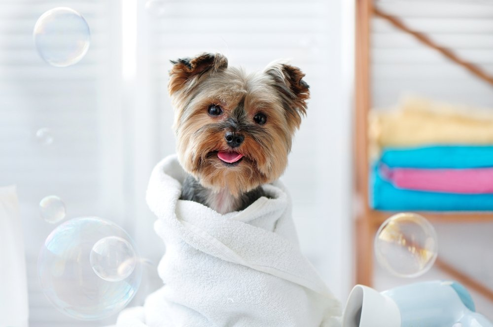 groom your dog at home