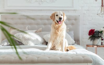 Are Golden Retrievers Good Family Dogs?