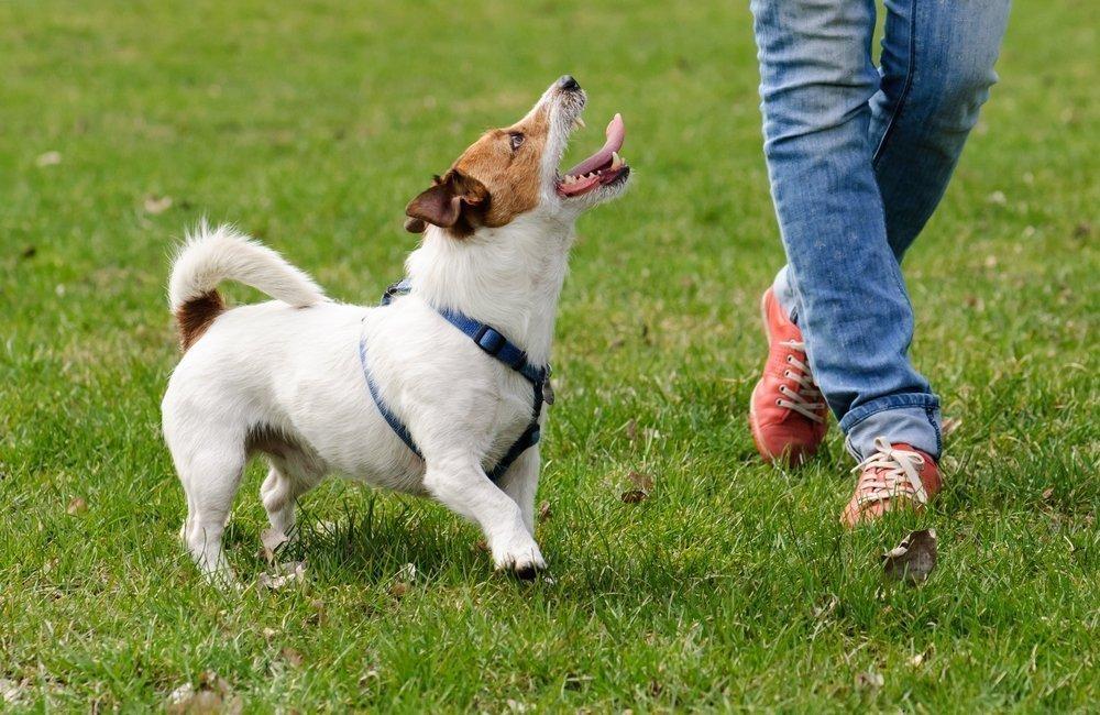 best online dog training courses