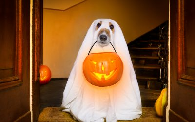 Five Amazing Halloween Gifts For Dogs