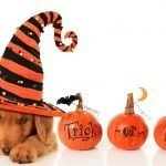 Dog Treats for Halloween That Are Healthy & Safe