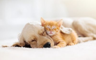 Pet Scams – How to Avoid Them Year Round