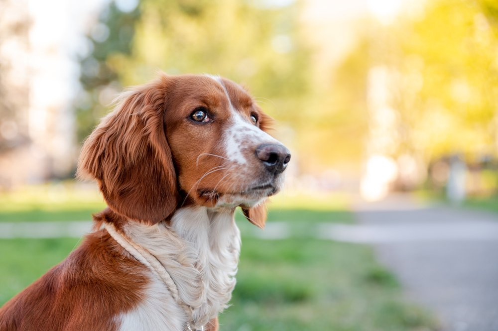 can dogs get colds from humans